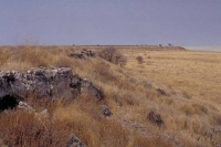 Etosha grass savanna plains 4