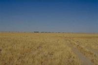 Etosha grass savanna plains 1.jpg